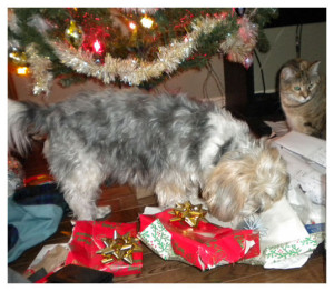 After opening presents: chaos!